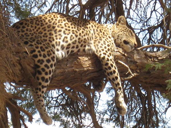 Tata Ma Tata Tours | Upington | Northern Cape Safaris