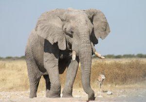 Richters Safaris